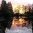 Sunrise in the Japanese Garden
