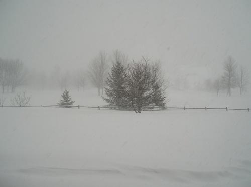 Backyard Snowstorm